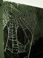 Dusty spider web.jpg
